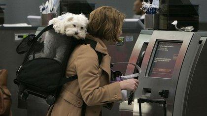 Varias líneas aéreas agregaron a sus servicios la admisión de mascotas en cabina (AP)