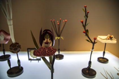 """""""Memoria vegetal"""", de la colección Robert Brendel Museo de Farmacobotánica Juan A Dominguez de la Universidad de Buenos Aires (Bienalsur)"""
