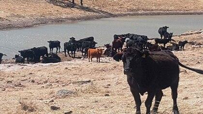 Los ranchos en conjunto tienen una extensión de 2.344 hectáreas (Foto: Archivo)
