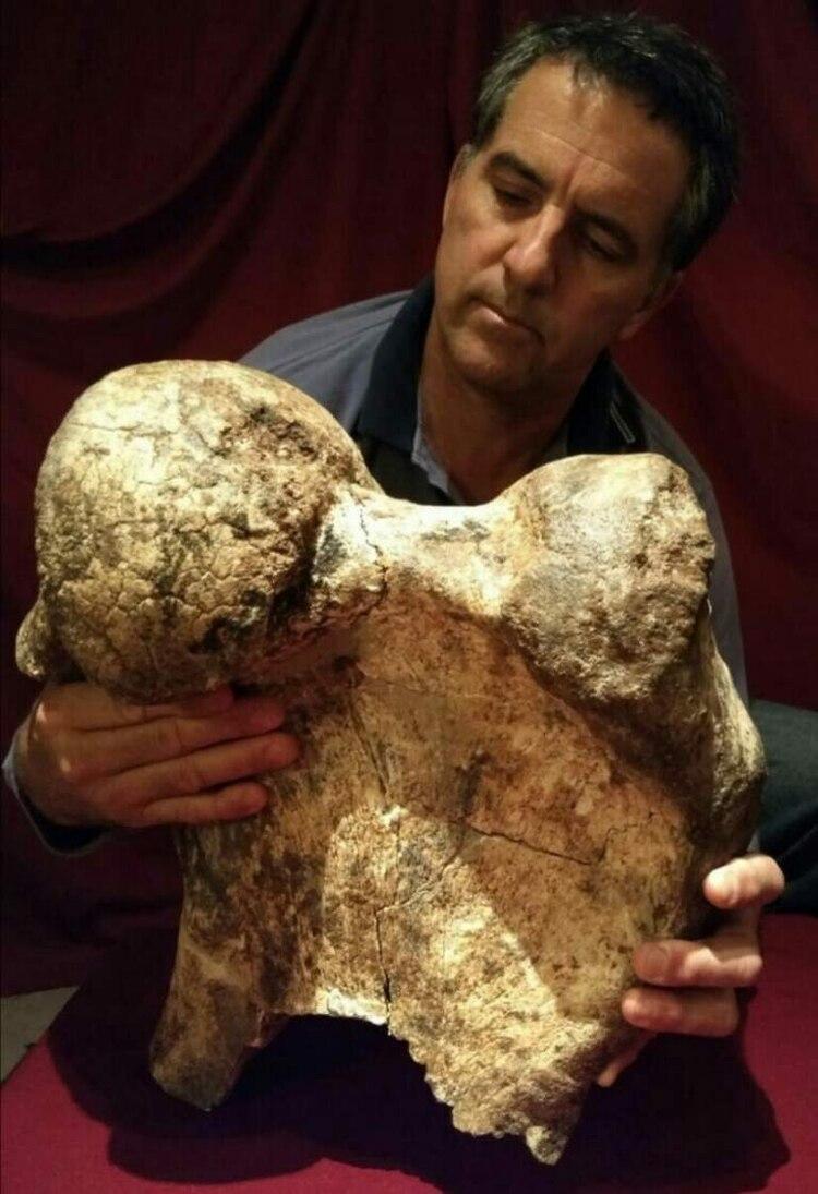 """(Foto: Museo Paleontológico de San Pedro """"Fray Manuel de Torres"""")"""