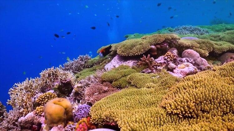 Cuidar el medio ambiente, los ecosistemas y la biodiversidad, además de ser una práctica de empatía hacia otras formas de vida, es un acto netamente egoísta y antropocéntrico