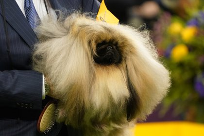 El pelaje es doble y se compone de un vello interior espeso, recto y suave, y de un pelo largo (Reuters)