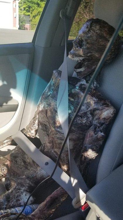 """""""Jeffy"""" fue confundido por las autoridades con el esqueleto de una persona real (Foto: Facebook – Rachel Thompson-Schmidt)"""