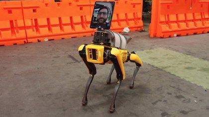 El robot integra una tablet por medio de la cual se pueden hacer videollamadas.