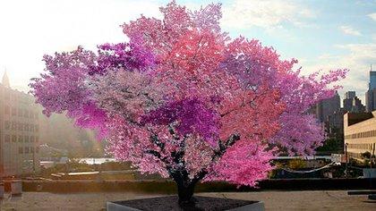 """El """"árbol de los 40 frutos"""" es una recreación digital de cómo se veráen plena floración"""