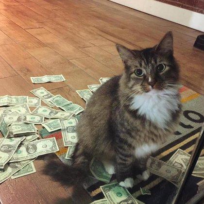 El felino y su botín(CASHnip Kitty)