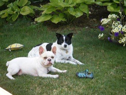 En la imagen, las otras dos mascotas de la víctima (Foto: Facebook)