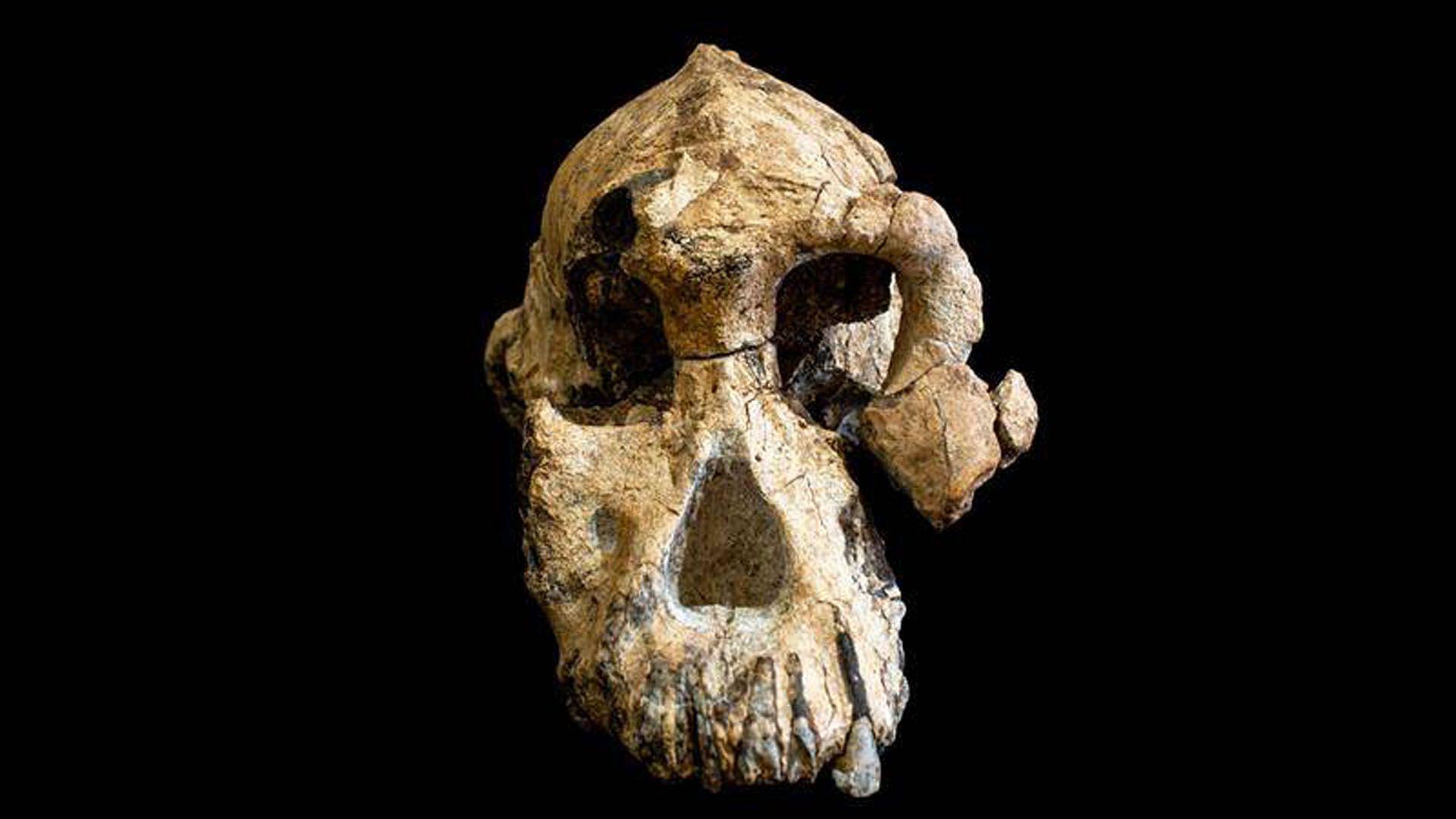 La pieza en su totalidad ha sido llamada MRD, en relación a la clasificación que recibió durante su excavación (EFE)