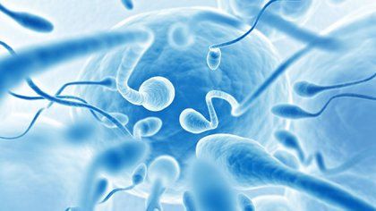 Los espermatozoides han encontrado una forma inteligente de adaptarse y nadar hacia adelante (Shutterstock.com)