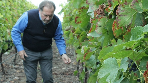 Rolland nació en 1947 en Pomerol (Francia), cuna del Merlot más prestigioso, y se crió entre viñas, ya que su padre era productor