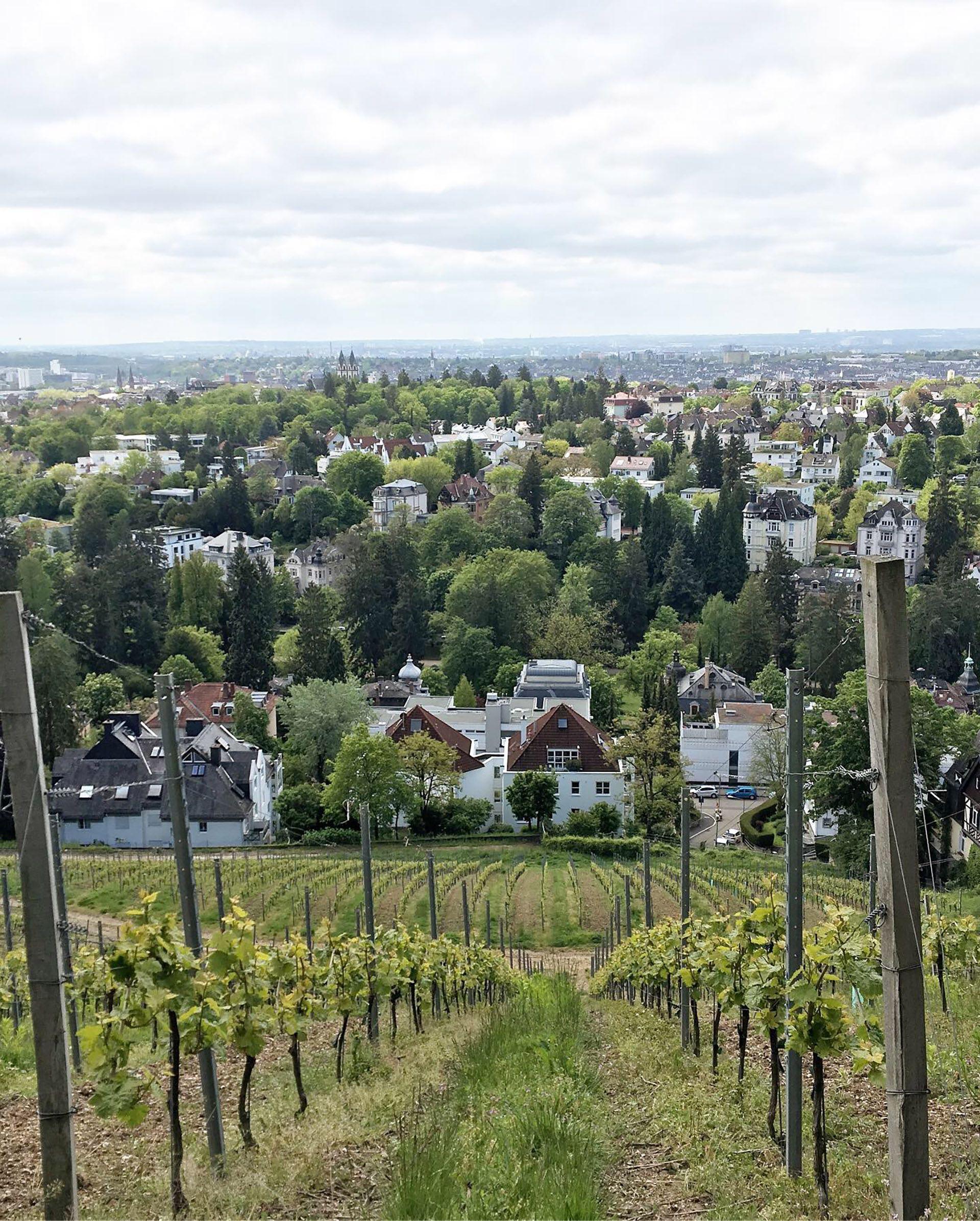 Vista de un viñedo en Hesse