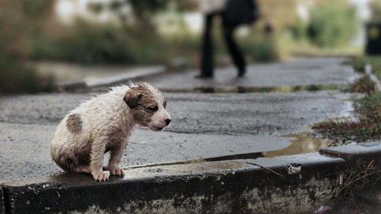 """El proyecto considea fauna urbana """"a los perros y gatos, machos y hembras, con o sin familia, en refugios o en situación de calle o abandono y los que estén bajo la órbita del Estado"""""""