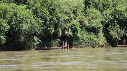 La selva misionera