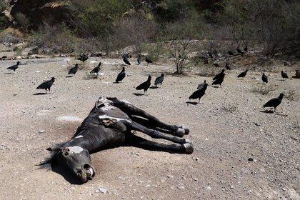 Y el ultimo caso, áreas de sequía excepcional, ubicadas en la frontera norte, en los estados de Sonora, Chihuahua y Tamaulipas. FOTO: ARCHIVO /CUARTOSCURO.COM