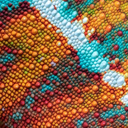 """Ignacio Palacios, España/Australia. Mención para el portfolio en la categoría """"Mundo Natural"""". Parque nacional de Mantadia, Madagascar. La imagen muestra los colores de un camaleón. (Ignacio Palacios/www.tpoty.com)"""