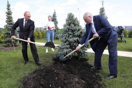 Putin y Lukashenko plantan un árbol en homenaje a las víctimas de la Segunda Guerra Mundial.  El 25% de la población bielorrusa murió en el conflicto.