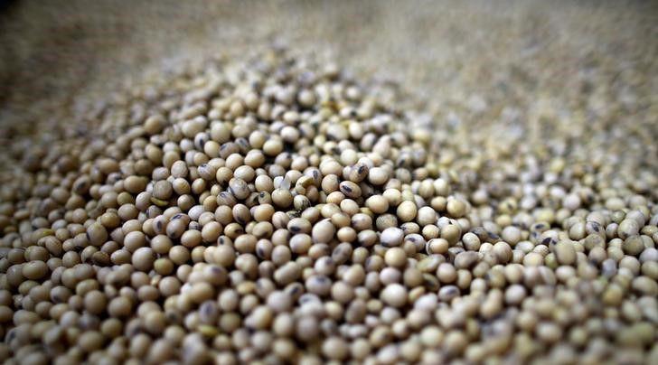 La soja registró un incremento de precio de casi 40% a lo largo de 2020. (Foto: REUTERS/Agustín Marcarián)