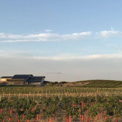 La Patagonia se destaca como una de las regiones vitivinícolas más atractivas y con más potencial del mundo