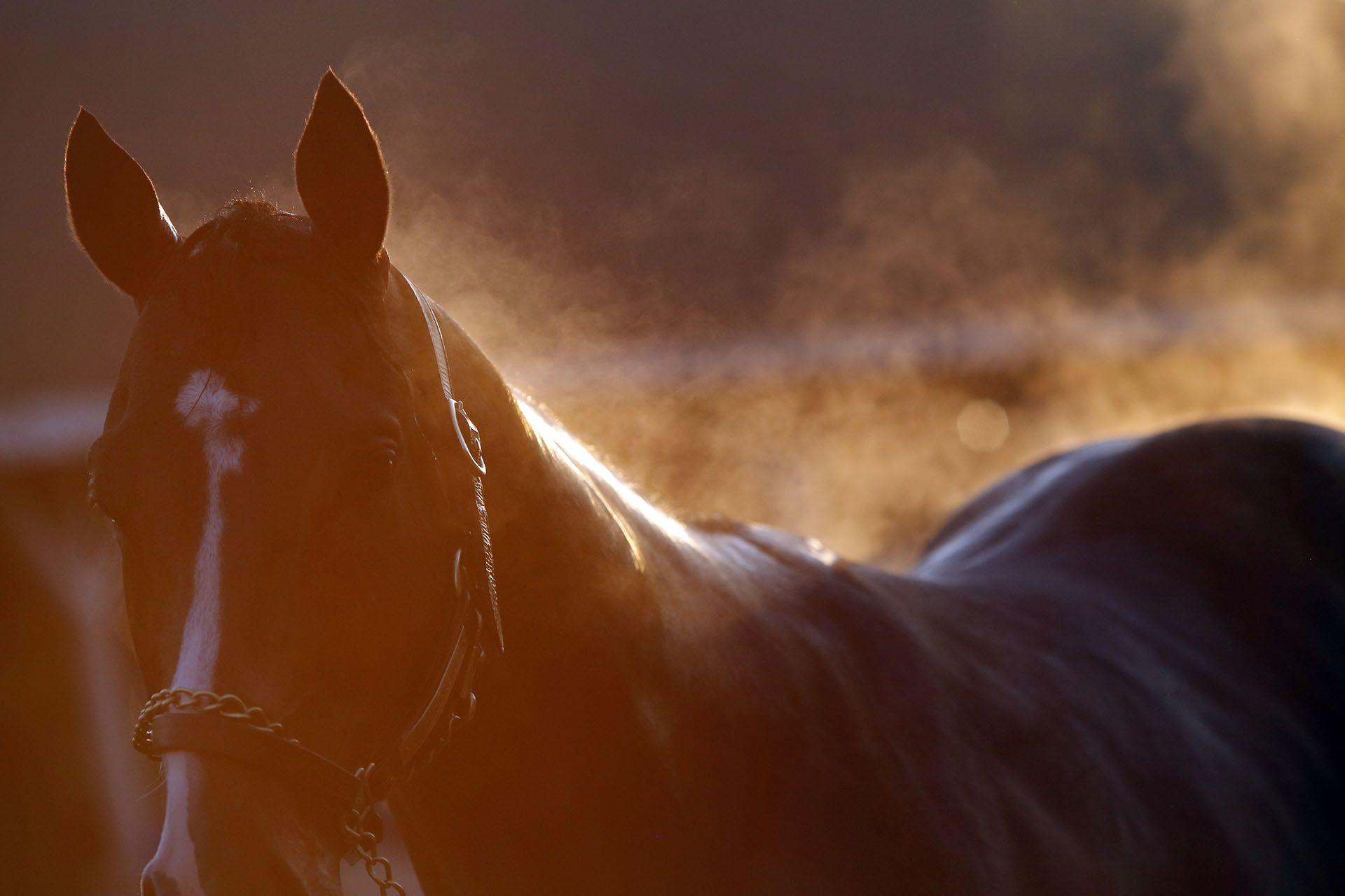 El suero equino hiperinmune es un desarrollo argentino contra el COVID-19 -Luke Sharrett/Bloomberg