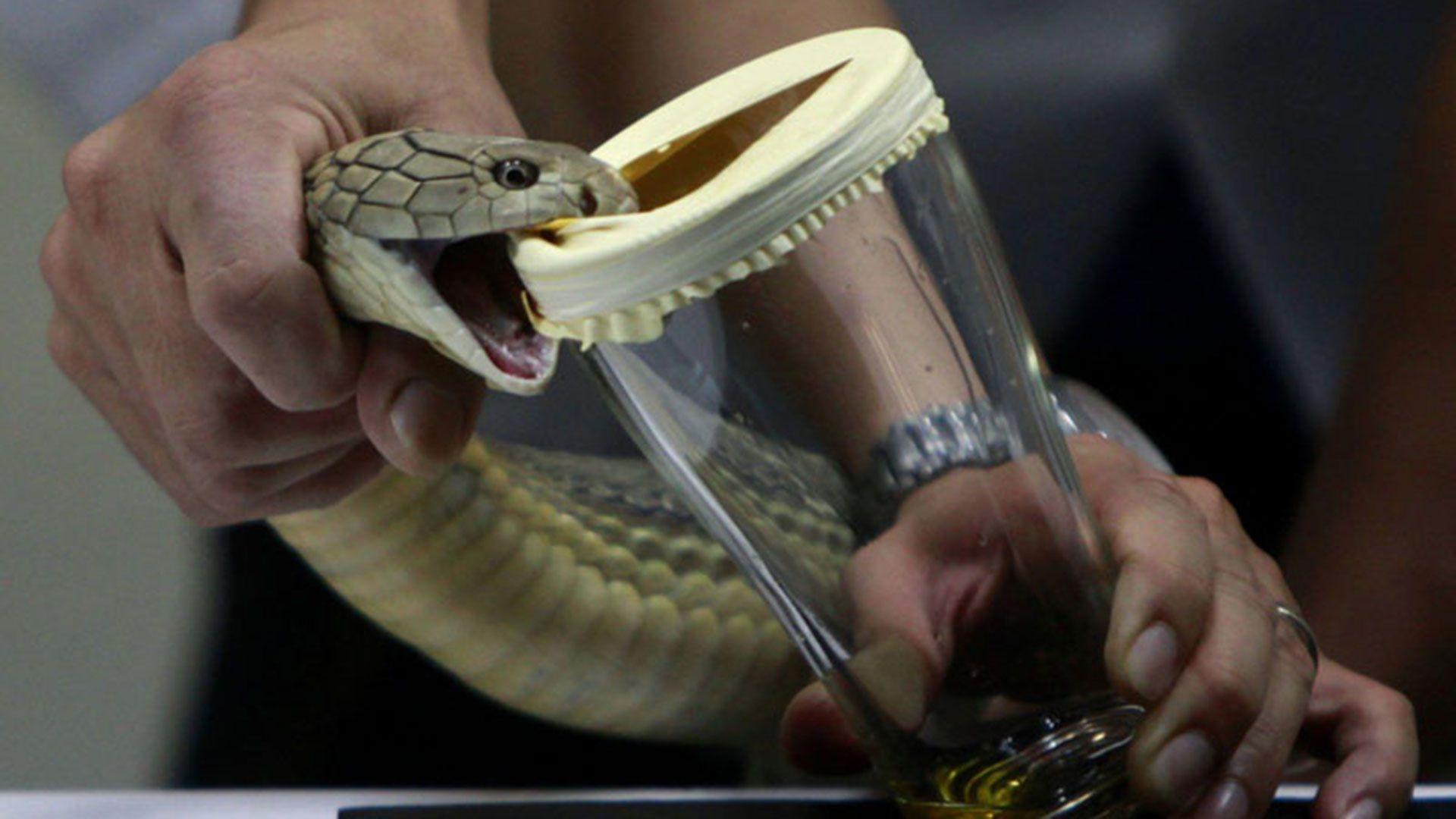 Según los científicos, los humanos tenemos el potencial para desarrollar mediante la evolución veneno similar al de las serpientes.