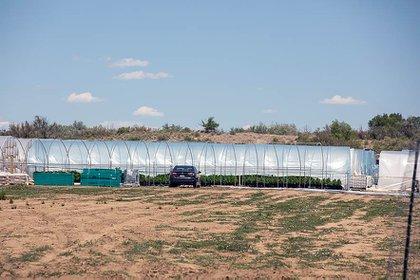 Una de las granjas de marihuana o cáñamo que se encuentra en el medio de Shiprock (Nuevo México). Crédito: Sharon Chischilly/Navajo Times.
