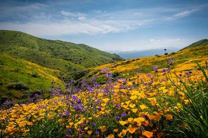 En Loma Linda, Los Ángeles, una comunidad adventista le atribuyen una importancia vital a la fe y también le dan lugar a la vida sana y a la alimentación equilibrada (Shutterstock)