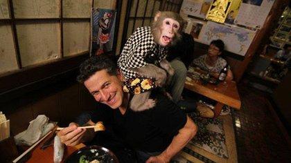 Estos simpáticos primates merodean entre los clientes para hacer de una simple cena un divertido momento