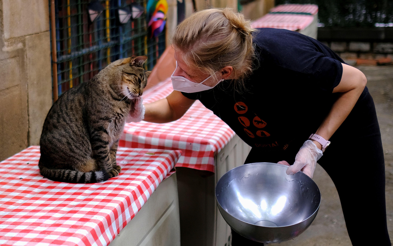 """""""Tanto los animales domésticos como silvestres tienen una bajísima probabilidad de contagiarse. Cuando lo hacen no presentan síntomas y, de presentarlos, los mismos son leves"""" (REUTERS)"""