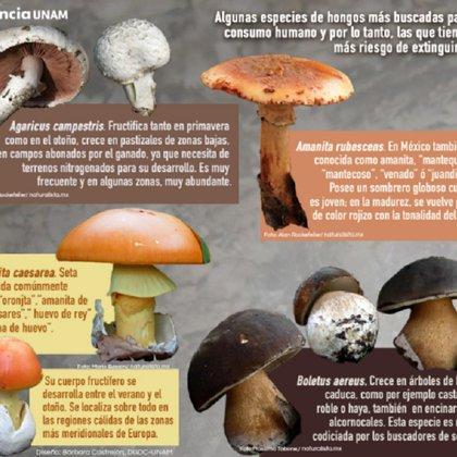 (Foto: Ciencia UNAM)