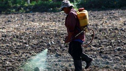 Narro Céspedes aseguró que su propuesta beneficiaría a millones de personas en el sector rural mexicano (Foto: Cuartoscuro)