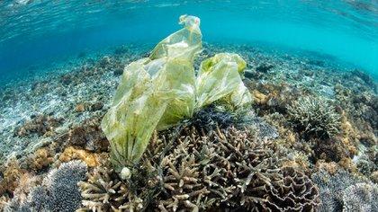Indonesia es el segundo país del mundo con mayor contaminación plástica (Sutterstock)