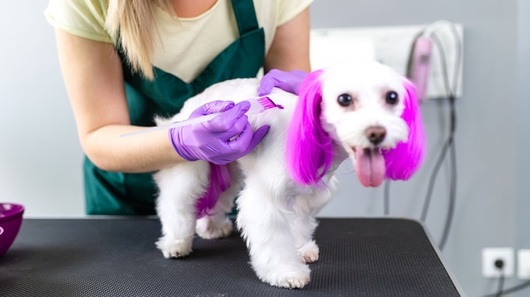 Perros teñidos: esto también es un acto de crueldad