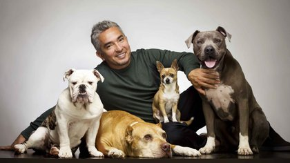 César Millán, el entrenador de las celebridades junto a perros. En diálogo con Infobae brindó consejos para adiestrar en casa