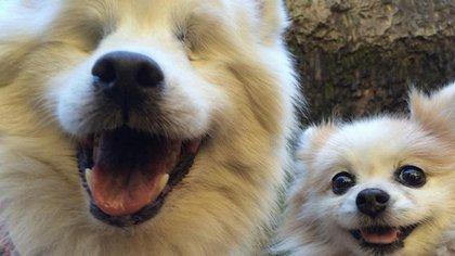 Hoshi y Zen, los perros inseparables (TheFluffyDuo)