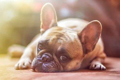 Los caninos también sufren si no son revisados con frecuencia por un especialista. (Foto: Pixabay)
