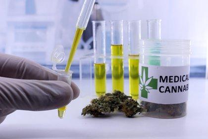 El cannabis medicinal en Colombia conoce un auge desde la aprobación de una ley que permite su sembradío destinado para proyectos terapéuticos / Crédito Archivo Infobae
