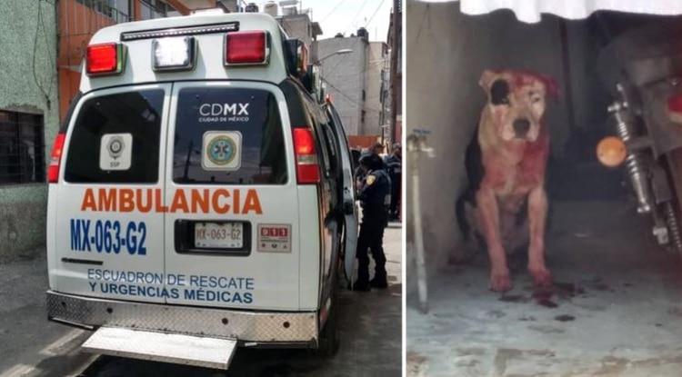 Un perro fue el protagonista de una tragedia en Iztapalapa (Foto: @LeslyBs1)