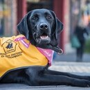 El 2 de junio se conmemora en Argentina el Día Nacional del Perro