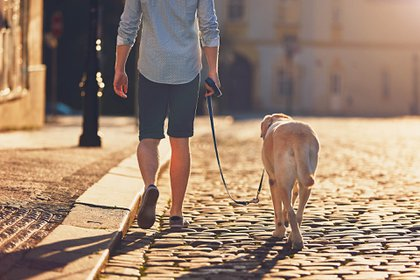 Los animales domésticos son capaces de ofrecer un profundo sentimiento de estabilidad (Getty)