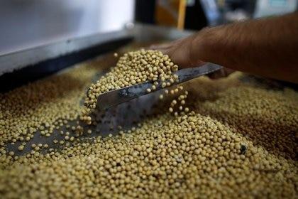Sigue subiendo el precio internacional de la soja ( REUTERS/Agustín Marcarian)