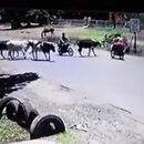 Por razones desconocidas, la vaca atacó a Natalia (Foto: Youtube)