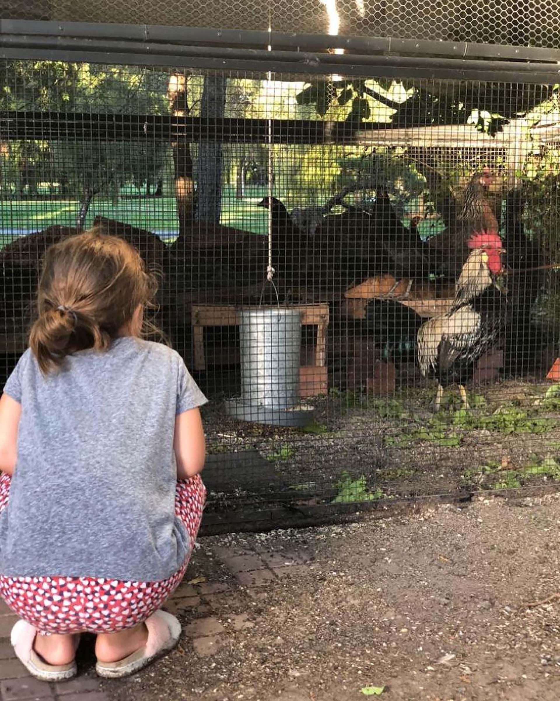 Antonia husmea un corral con gallinas