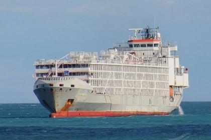El buque Gulf Livestock 1 (foto: Vesselfinder/Frans Truyens)
