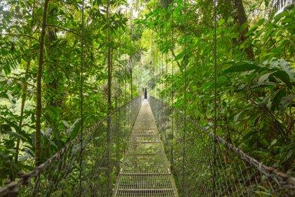 La vegetación es una de las cosas que destaca a Costa Rica (Shutterstock)