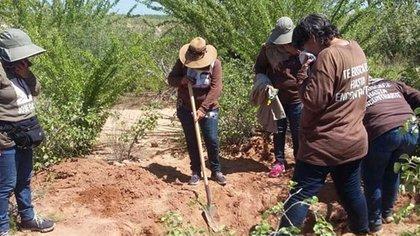 La asociación empezó la búsqueda en las cercanías de la Carretera Estatal 100, Hermosillo-Bahía de Kino, después de recibir una llamada anónima que advertía sobre el lugar (Foto: Facebook/Madres Buscadoras de Sonora)