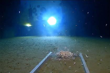Criaturas marinas nadan alrededor de un módulo de aterrizaje sumergible, iluminado por la luz del submarino DSV Limiting Factor, en el fondo de la Fosa de las Marianas del océano Pacífico. Imagen fija del video publicado por Discovery Channel (Foto: Discovery Channel/ Reuters)