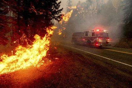 Bomberos intentan combatir las llamas en California. (AP Photo/Noah Berger)