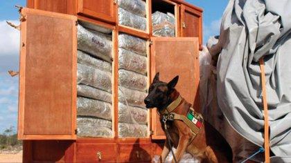 Elemento canino que encontró la presunta droga (Foto: Facebook / SSP Yucatán)