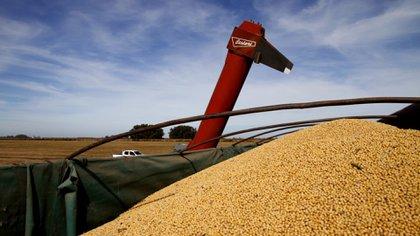 En el primer semestre, los sectores oleaginosos y cerealeros, originaron ventas al exterior por USD 12.687 millones