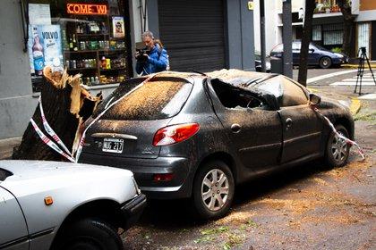 Un Peugeot 207 fue aplastado por un árbol en Malabia y Guatemala
